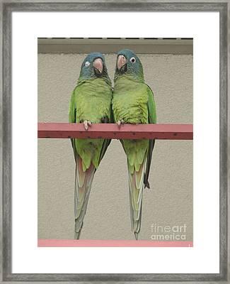 Wild Parrots Framed Print