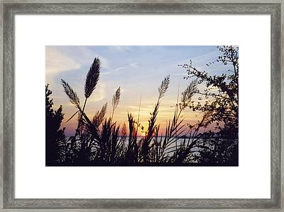 Framed Print featuring the photograph Wild Plumes by Michele Kaiser