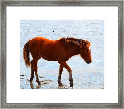 Wild Pony Framed Print by Cindy Croal
