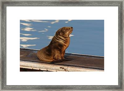 Framed Print featuring the photograph Wild Pup Sun Bathing - 2 by Christy Pooschke
