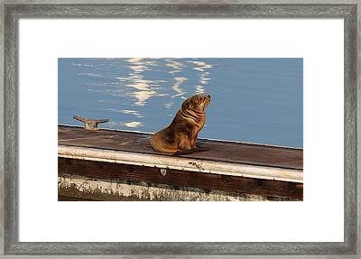 Framed Print featuring the photograph Wild Pup Sun Bathing by Christy Pooschke