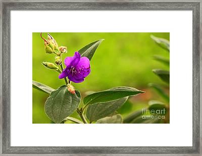 Wild Purpure Framed Print