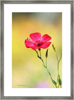 Wild Red Flower Framed Print
