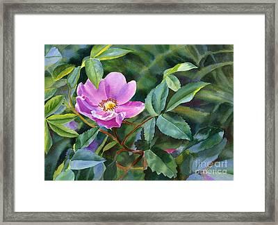 Wild Rose Blossom 2 Framed Print by Sharon Freeman