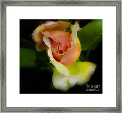 Wild Rose Framed Print by Leon Hollins III