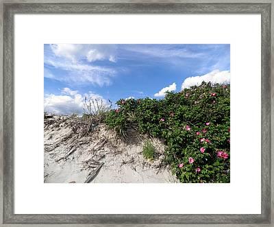 Wild Roses After High Tide Framed Print