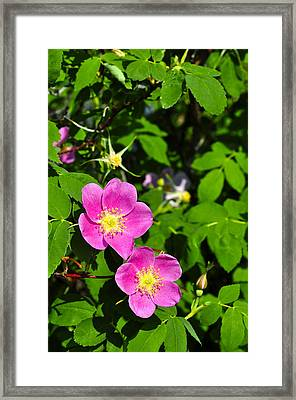 Framed Print featuring the photograph Wild Roses by Cathy Mahnke