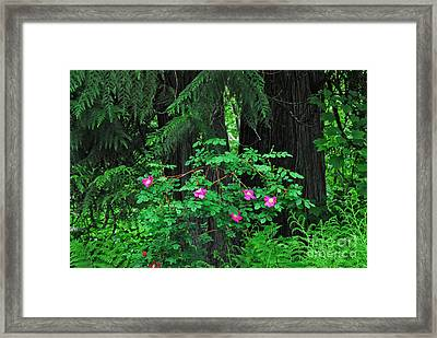 Framed Print featuring the photograph Wild Roses by Sam Rosen