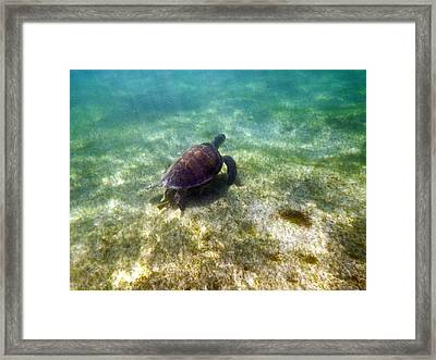 Framed Print featuring the photograph Wild Sea Turtle Underwater by Eti Reid