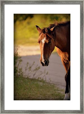 Framed Print featuring the photograph Wild Shadows by Amanda Vouglas