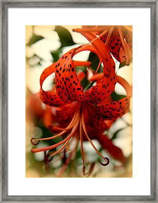 Wild Smokies Lily Framed Print by Karen Wiles