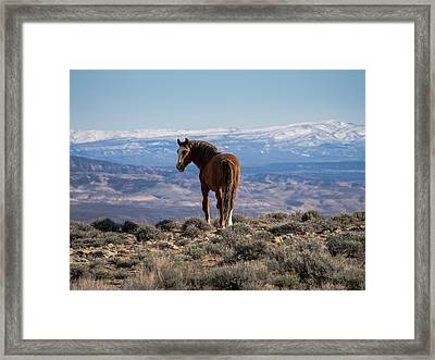 Wild Stallion Of Sand Wash Basin Framed Print