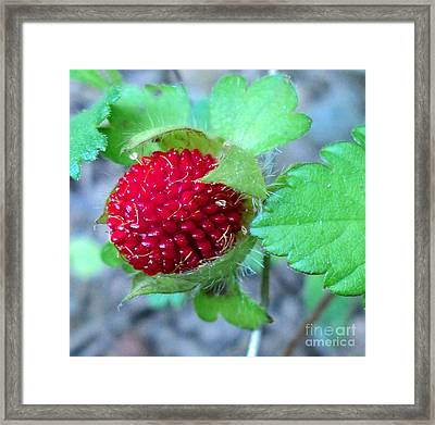 Wild Strawberry Macro Framed Print