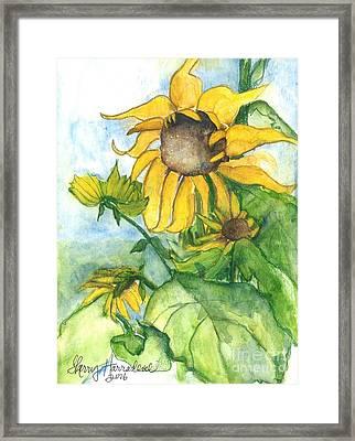Wild Sunflowers Framed Print by Sherry Harradence