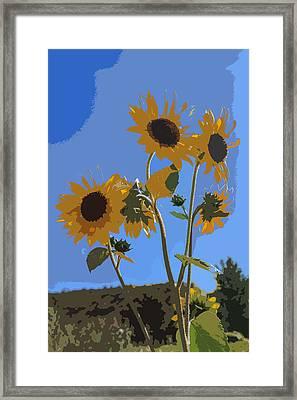 Wild Sunfowers Cutout Framed Print by Scott Campbell