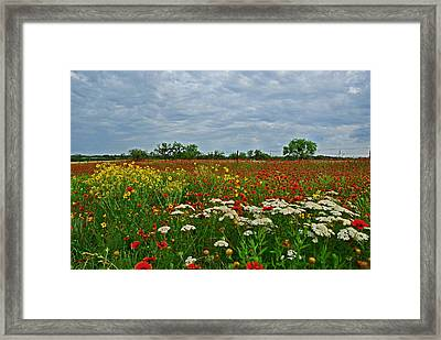 Wild Texas Framed Print
