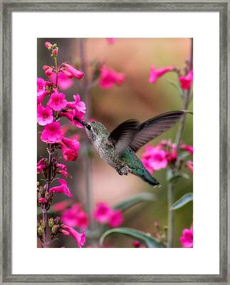 Wild Thing Framed Print by Tammy Espino