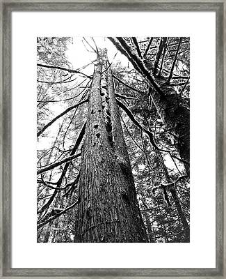 Framed Print featuring the photograph Wild Things Hotel by Adria Trail