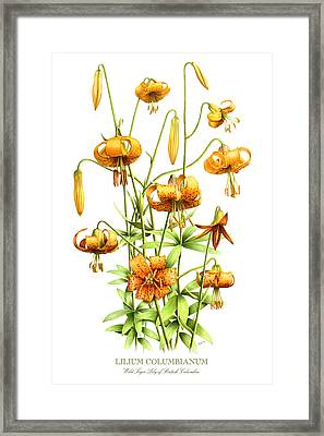 Wild Tiger Lilies Framed Print by Artellus Artworks