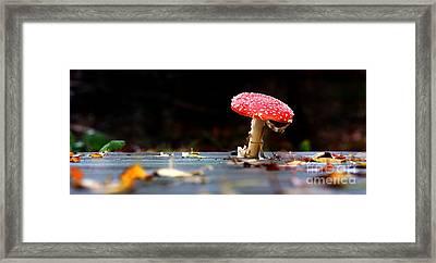 Wild Toadstool Framed Print by Simon Bratt Photography LRPS