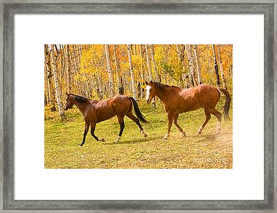Wild Trotting Autumn Horses Framed Print by James BO  Insogna
