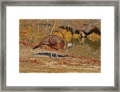 Wild Turkey Framed Print by Al Powell Photography USA
