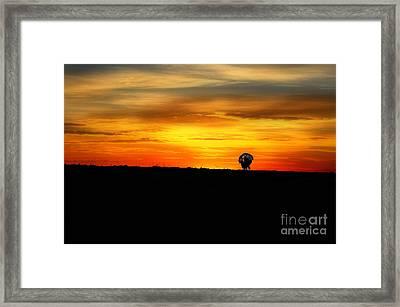 Wild Turkey At Sunset Framed Print by Dan Friend