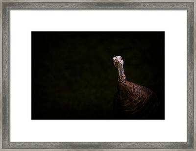 Wild Turkey Portrait Framed Print
