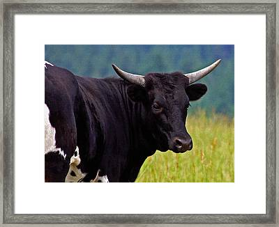 Framed Print featuring the painting Wild Type Colored Heifer Longhorn Cow by Karon Melillo DeVega