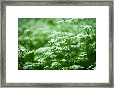 Wild Vegetation Framed Print by Alexander Senin