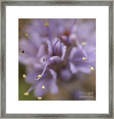 Wild Wildflower Framed Print