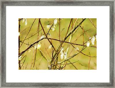 Wild Willows Framed Print by Bonnie Bruno