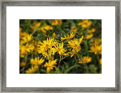 Framed Print featuring the photograph Wild Yellow Daisies by Susan D Moody