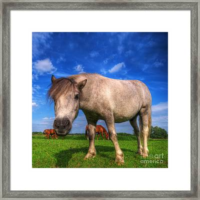 Wild Young Horse On The Field Framed Print