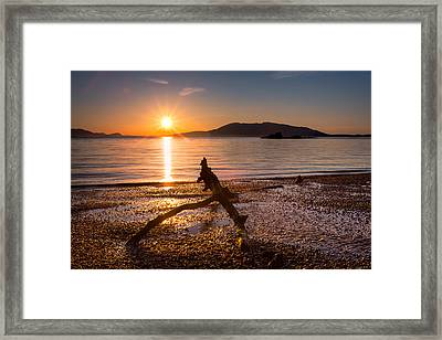 Wildcat Cove Framed Print by Alexis Birkill