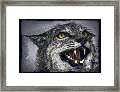 Wildcat Ferocity Framed Print by Daniel Hagerman