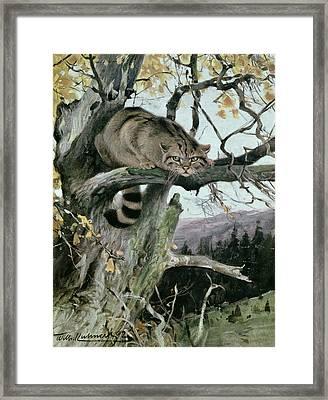 Wildcat In A Tree Framed Print