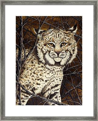 Wildcat Framed Print by Rick Bainbridge