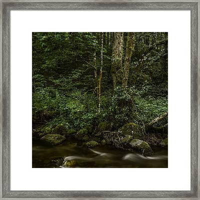 Wilde Gutach 3 Framed Print