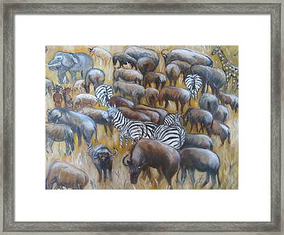 Wildebeest Migration In Kenya Framed Print