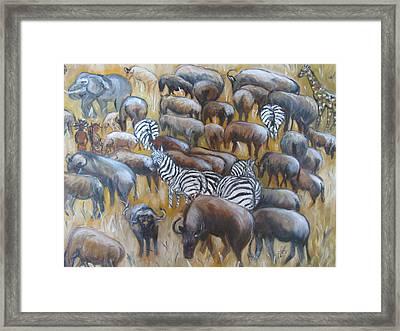 Wildebeest Migration In Kenya Framed Print