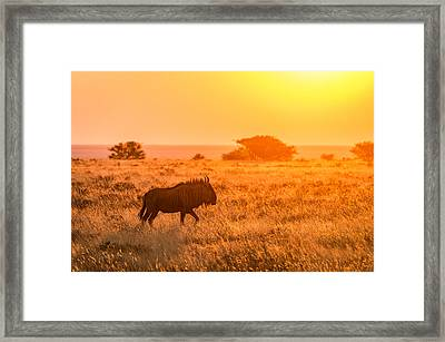 Wildebeest Sunset - Namibia Africa Photograph Framed Print