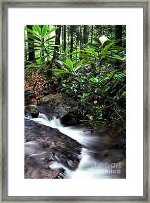 Wilderness Spring Framed Print by Thomas R Fletcher