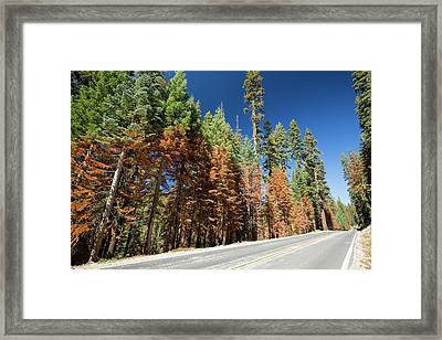 Wildfire Damage In Yosemite National Park Framed Print
