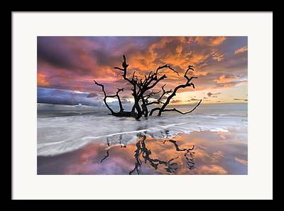 Tree Reflection At Sunset Framed Prints