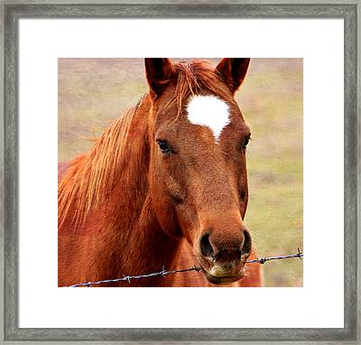 Wildfire - Equine Portrait Framed Print by Deena Stoddard