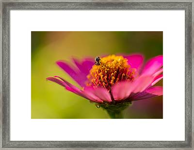 Wildflower - Bali Framed Print by Matthew Onheiber