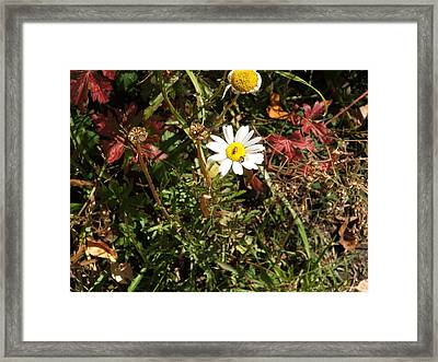 Wildflower @ Kit Carson Framed Print
