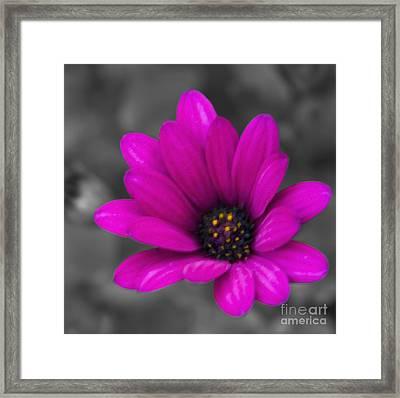 Wildflower 1 Framed Print by Jacquelinemari
