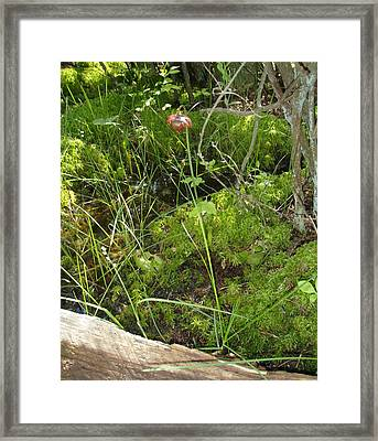 Framed Print featuring the photograph Wildflower 1 by Robert Nickologianis